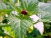 photos-couleur-automne-2011-047-001