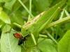 photos-recuperation-escargot-herbes-024